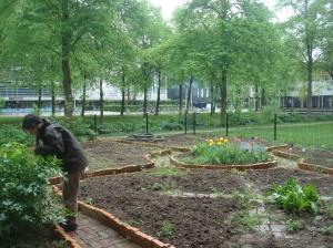 Ambra, the constant gardener
