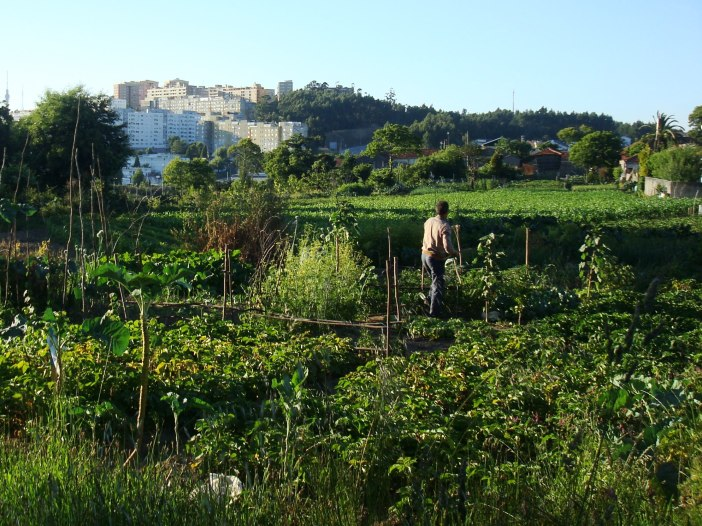 Another vegetable garden, looking on Vila D'Este, a big residential development.